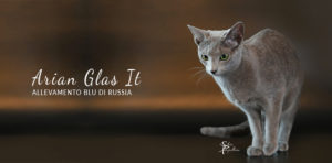 Arian Glas It - Facebook